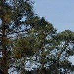 Profilovka od pifin71